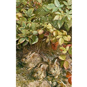 A Young Generation - Three Cottontail Rabbits by wildlife artist Carl Brenders