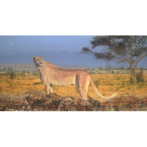 Phantom - cheetah with genetic colour variation by artist Guy Combes