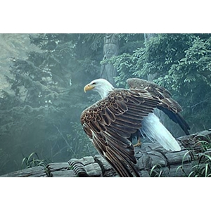 Fallen Totem - Bald Eagle by artist Ron Parker