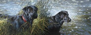 Black Magic - two black labrador retrievers by artist Bonnie Marris
