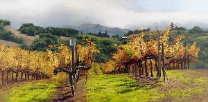 Fall Vineyard by June Carey