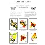 Butterflies - European Group #2 by wildlife artist Carl Brenders