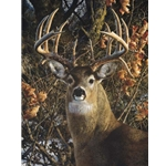 An Autumn Gentleman - White-tailed Buck by wildlife portrait artist Carl Brenders