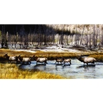 Autumn Procession - Elk Herd by wildlife artist Carl Brenders