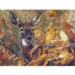 Autumn Lady - White-tailed Doe by wildlife portrait artist Carl Brenders