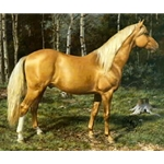 Blond Beauty - Palomino by artist Carl Brenders