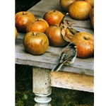 Apple Harvest - Dark-eyed Junco by wildlife artist Carl Brenders