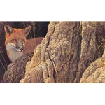 Curious Glance - Red Fox by Robert Bateman