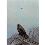 Dark Gyrfalcon by Robert Bateman