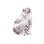 Young Snowy Owl by Robert Bateman
