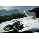 Arctic Light - Arctic Wolf by wildlife artist Terry Isaac