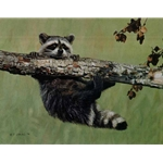 Chin-up - Raccoon by wildlife artist Terry Isaac