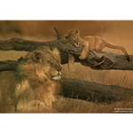Waiting Game Lion and Cub by wildlife artist Dino Paravano
