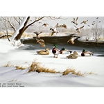 Cold Morning Mallards by wildlife artist Maynard Reece
