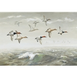Morning Fog - Canvasbacks by wildlife artist Maynard Reece
