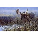 Cautious Approach - Bull Moose by artist Paco Young