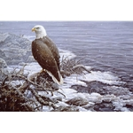 Shoreline Flurries - Bald Eagle by artist Paco Young