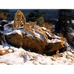 Rocky Mountain Cougars by artist Dino Paravano