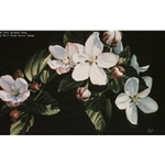 Apple Blossom Time by floral artist Arleta Pech