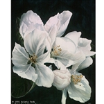 First Taste of Spring - Apple Blossoms by floral artist Arleta Pech