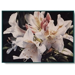 Rhodies - Rhododendrons by floral watercolor artist Arleta Pech
