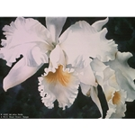 Orchid Magic by floral watercolor artist Arleta Pech