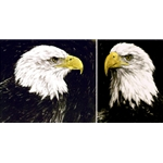 Bald Eagle Portraits (pair) by wildlife artist Chris Calle