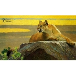 Look Before the Leap - Cougar by wildlife artist Bob Kuhn mpp