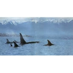 Silent Passage - Orcas by wildlife artist Ron Parker