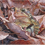 Zen Master of the Forest Floor - Toad by Wes Siegrist