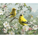 Orchard Goldfinch apple blossoms by wildlife artist Joe Hautman