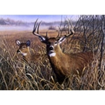 Last Look Whitetails by wildllife artist Robert Hautman