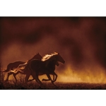 Painted Sunset - horses by western photographer Kimerlee Curyl
