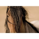 Freedom Wind - Portrait of wild horse by photographer Kimerlee Curyl