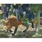 Between the Vines ~ Red Fox - vineyard prowler by wildlife artist Carl Brenders