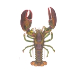 World Record Lobster - (may be hung vertically or horizontally) by deep sea artist Flick Ford