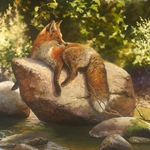 His Favorite Spot - Red fox resting on a rock by artist Bonnie Marris