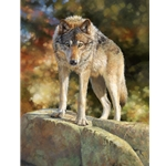 Eye to Eye - timber wolf face to face by wildlife artist Bonnie Marris