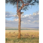 Sanctuary - leopard in boscia tree and hyenas by artist Guy Combes