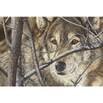 ~ Hiding in Plain Sight - portrait of wolf by Judy Larson