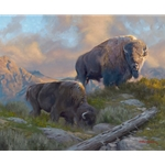 Morning Graze - Bison pair by artist Dustin Van Wechel