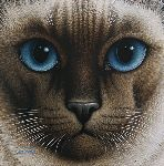 Chocolate Point Siamese by Braldt Bralds