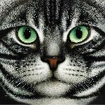 American Shorthair by Braldt Bralds