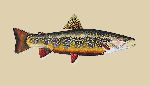 Brook Trout by James Prosek