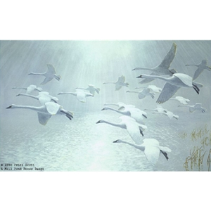 20 Whistling Swans Came out of the Mist by Peter Scott