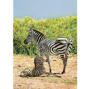A Shaky Start - Zebra foal with mother by african wildlife artist Guy Combes