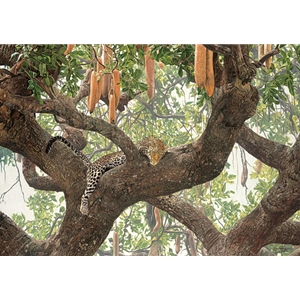 Leopard Lounge - resting in Sausage tree by artist Guy Combes