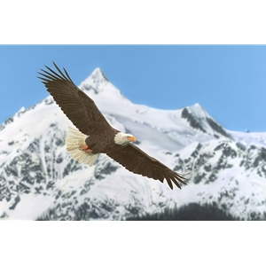 The Patriot - bald eagle in flight by artist John Bye