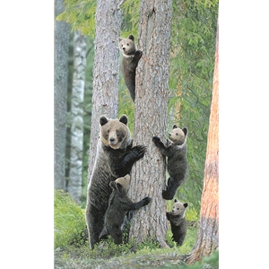 Tree Huggers - brown bear & cubs by wildlife artist John Bye