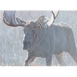 Bull of the Woods - Moose by John Banovich
